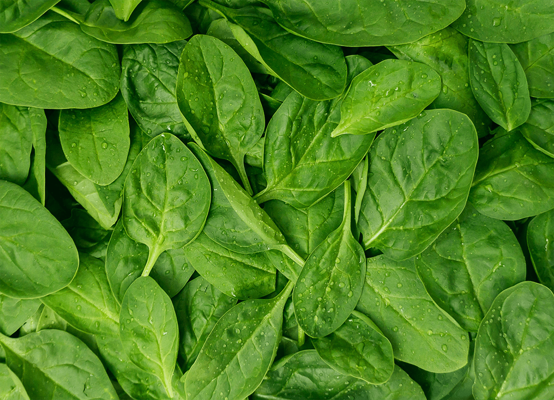 Spinach Leaf Extract